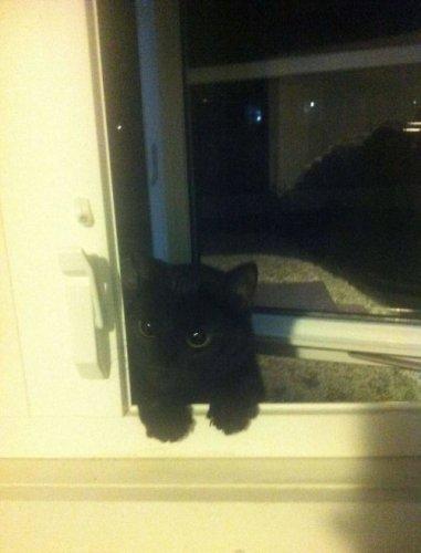 Забавные кошки (30 фото)