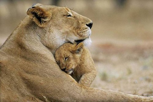 Красивые фотографии диких животных (35 фото)