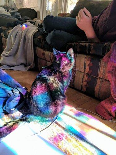 Юмор : Я на солнышке лежу! Эти котейки познали полный дзен (6 фото)