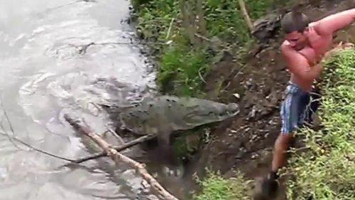 Неожиданные нападения животных в водной среде на людей