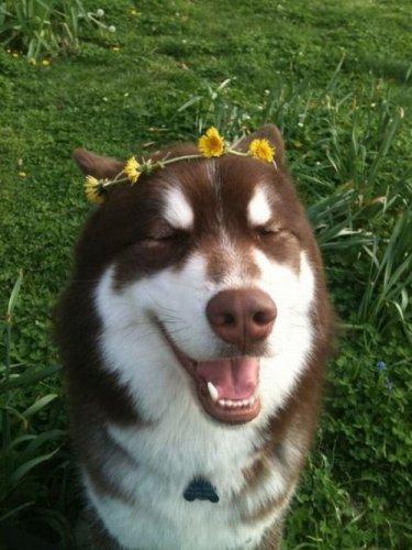 Позитив в фотографиях с животными (30 фото)