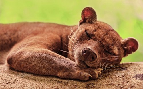 Прикольные и милые животные (25 фото)