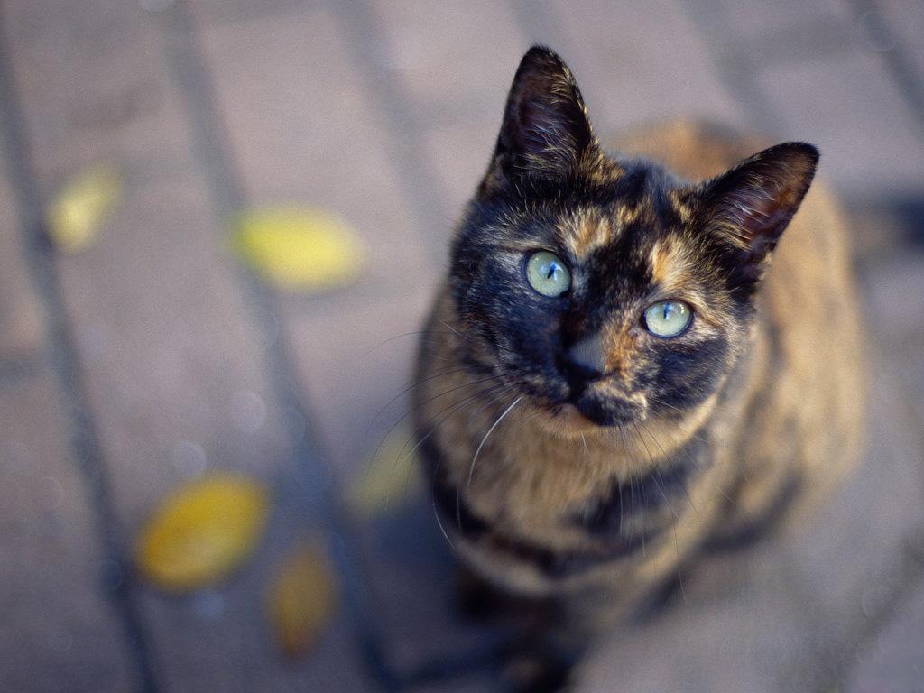 разноцветные кошки фото выбора, характеристики