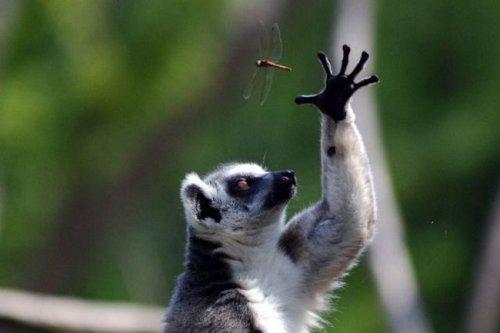 Стоп-кадры с участием представителей мира животных (25 фото)
