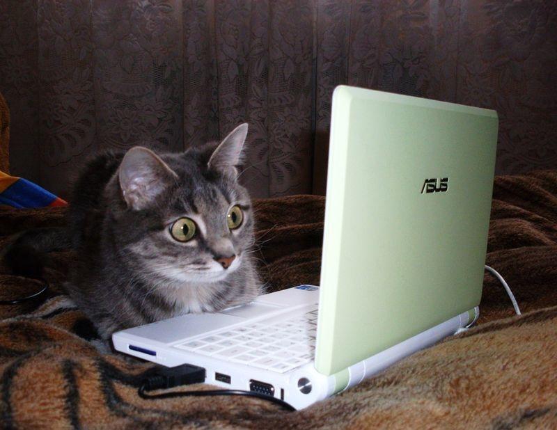 Смешная картинка с ноутбуком, картинке фото
