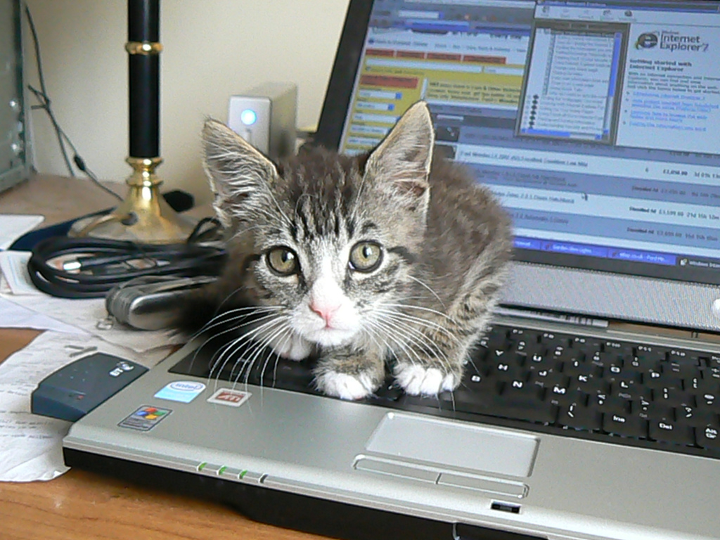 Демотиваторы коты и компьютер