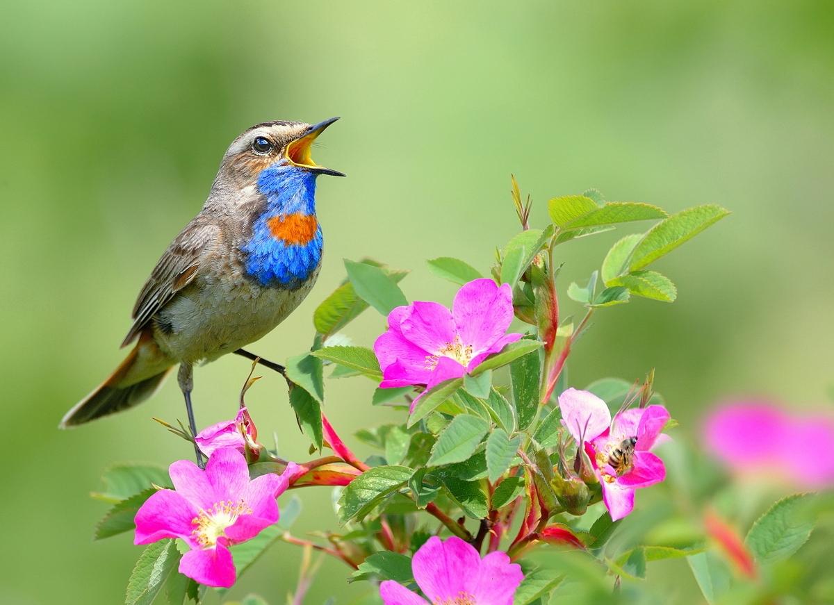 картинки птицы с пением птиц состоят светодиодной