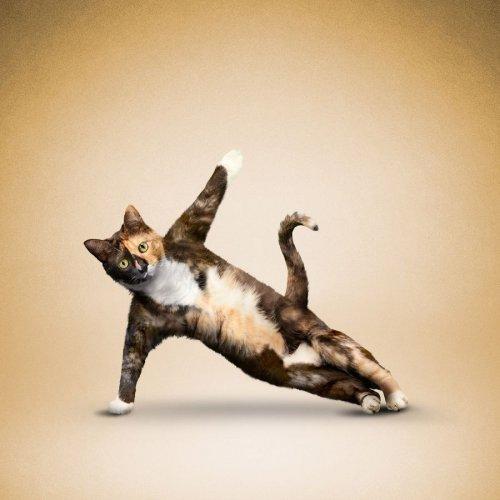 Йога-животные (19 фото)