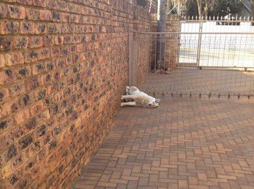 Юмор : Собаки, которые делают странные вещи и это смешно! (17 фото)