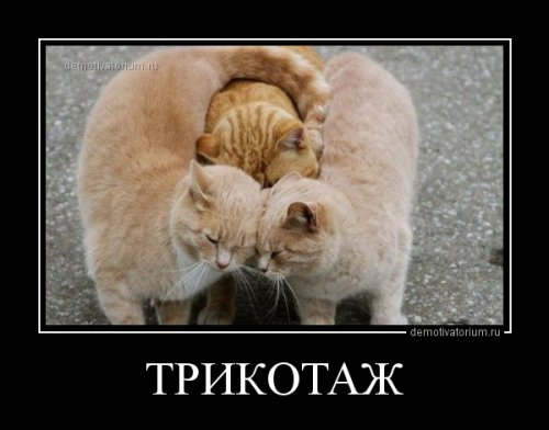 Демотиваторы для настроения! (20 фото)