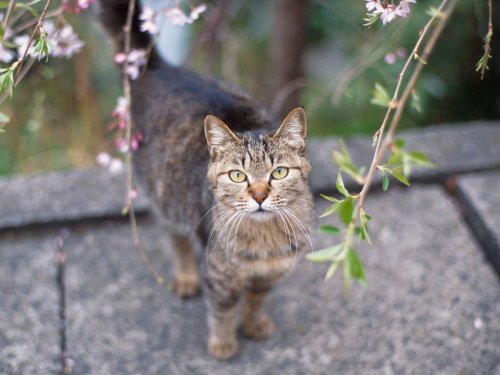 Просто кошки (30 фото)