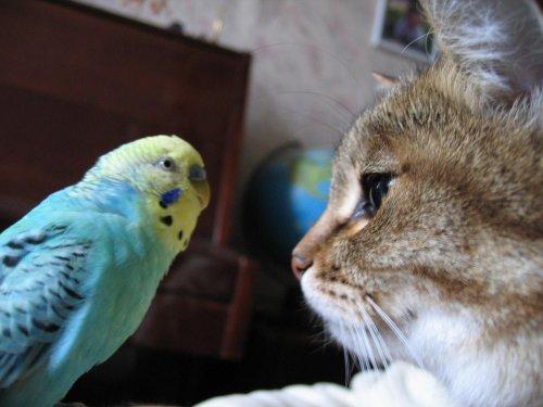 Юмор : Попугай говорит с котом