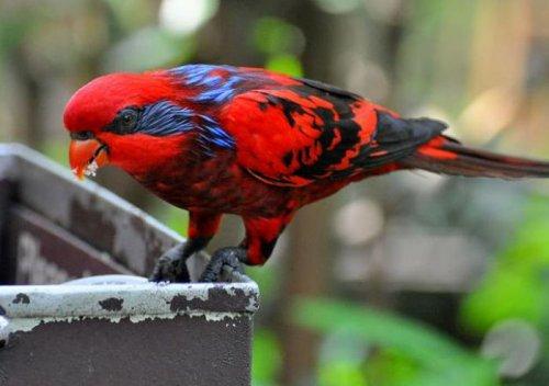 Очень красочные и разнообразные птицы (41 фото)