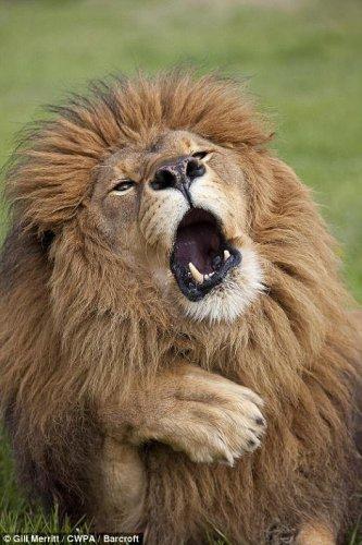 Смешные фотографии с животными для  фотоконкурса Comedy Wildlife Photography Awards 2017 (14 фото)