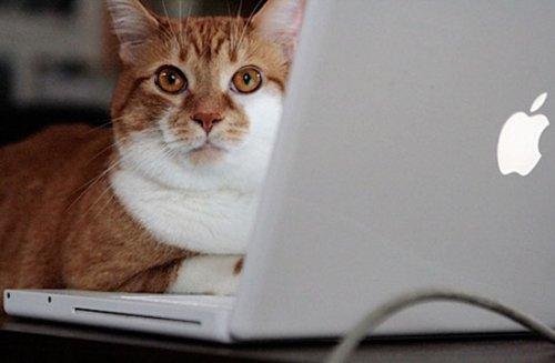В каждом коте живёт программист:)(25 фото)