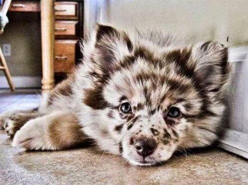 20 очаровательных собак с необычным окрасом (20 фото)