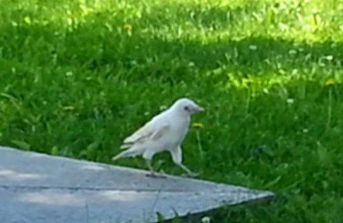 Эстония: Невероятно! Белая ворона.