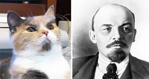 Юмор : Животные и знаменитости с удивительными сходствами:) (8 фото)