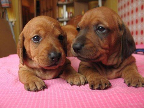 Прелестные щенки (30 фото)