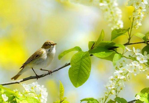 Голоса лета (20 фото)
