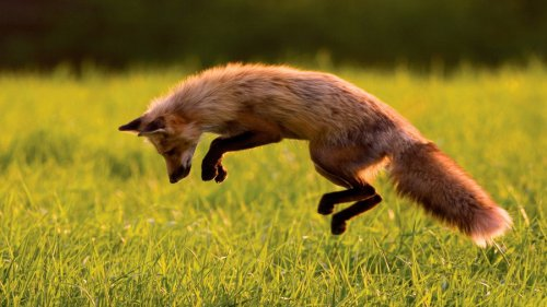 Животные летом (30 фото)
