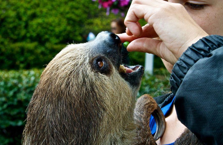 Эти смешные и забавные животные (40 фото)