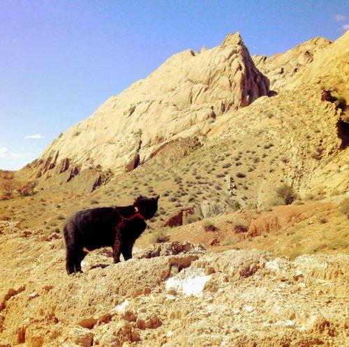 Милли- пушистая альпинистка (21 фото)