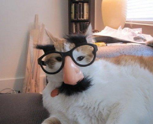Мурзики в очках (10 фото)