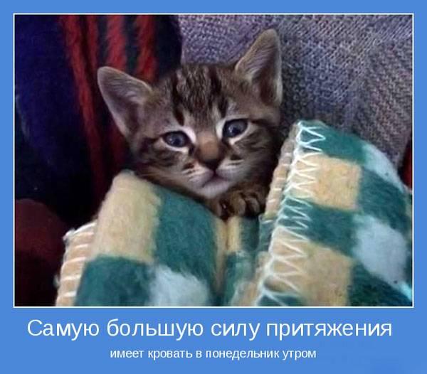 Мотиваторы про животных (30 фото)