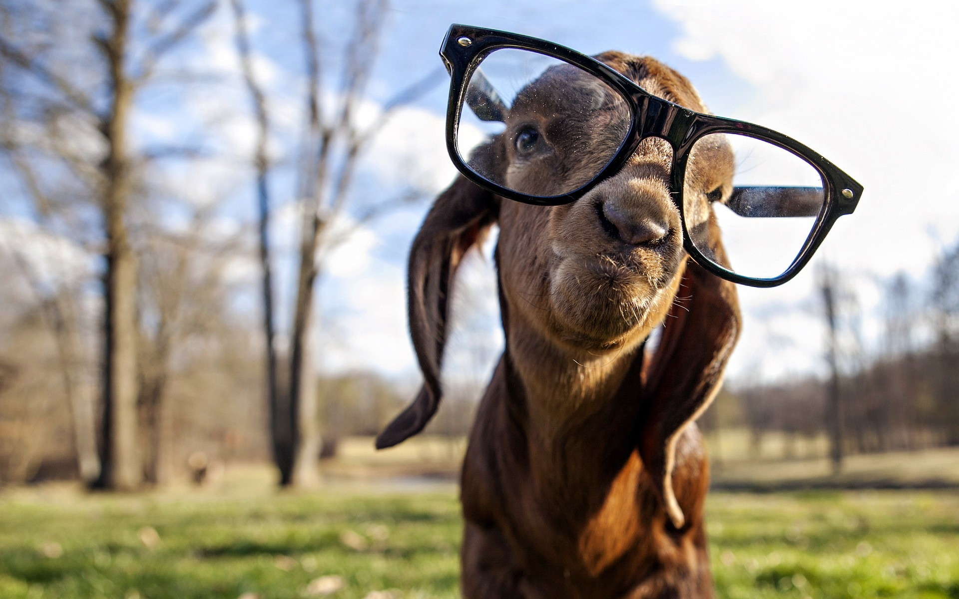 тому же, фото смешных животных сайты квартиру опоясывает