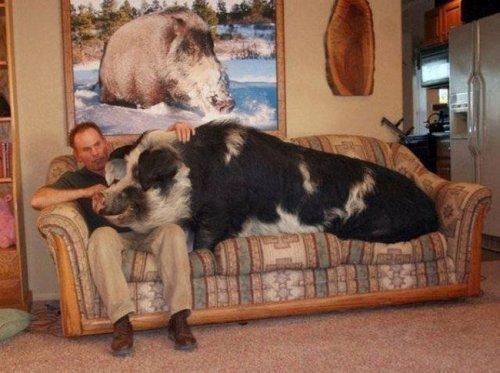 Экзотические животные в домашней среде (23 фото)