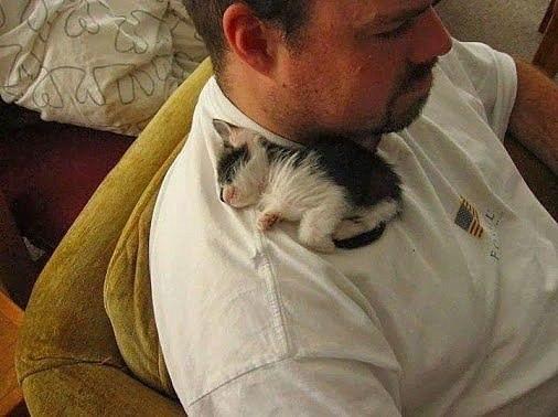 Очаровательные котейки (30 фото)