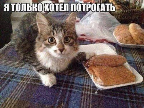 Кушать хочется всегда! (42 фото)