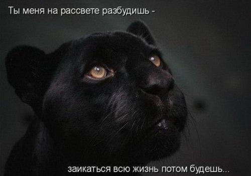 Забавная котоматрица (25 фото)