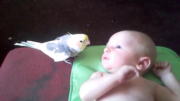 Юмор: Песня для младенца