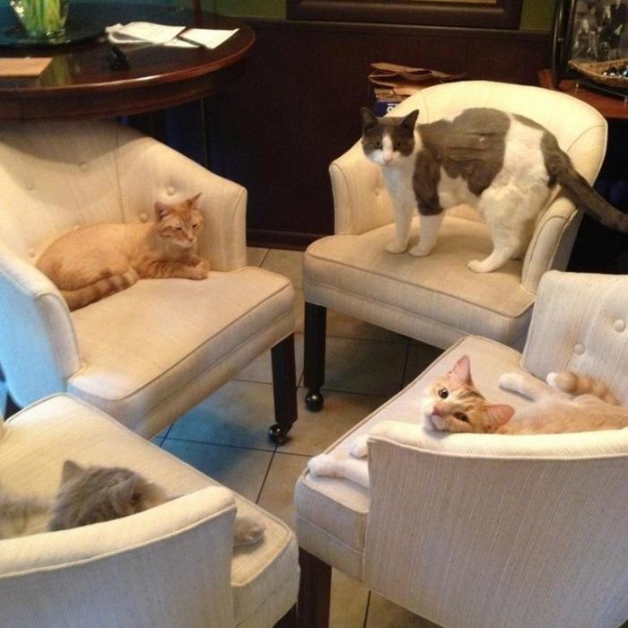 Милые котики и кошечки (36 фото)
