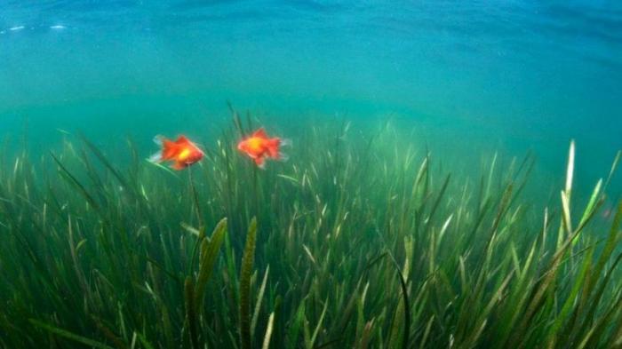 Это интересно: Вся правда о рыбах (10 фото)