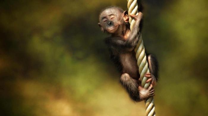 Держи меня, веревочка, держи:) (35 фото)