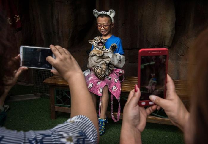 Тигриная ферма в Китае (15 фото+ видео)
