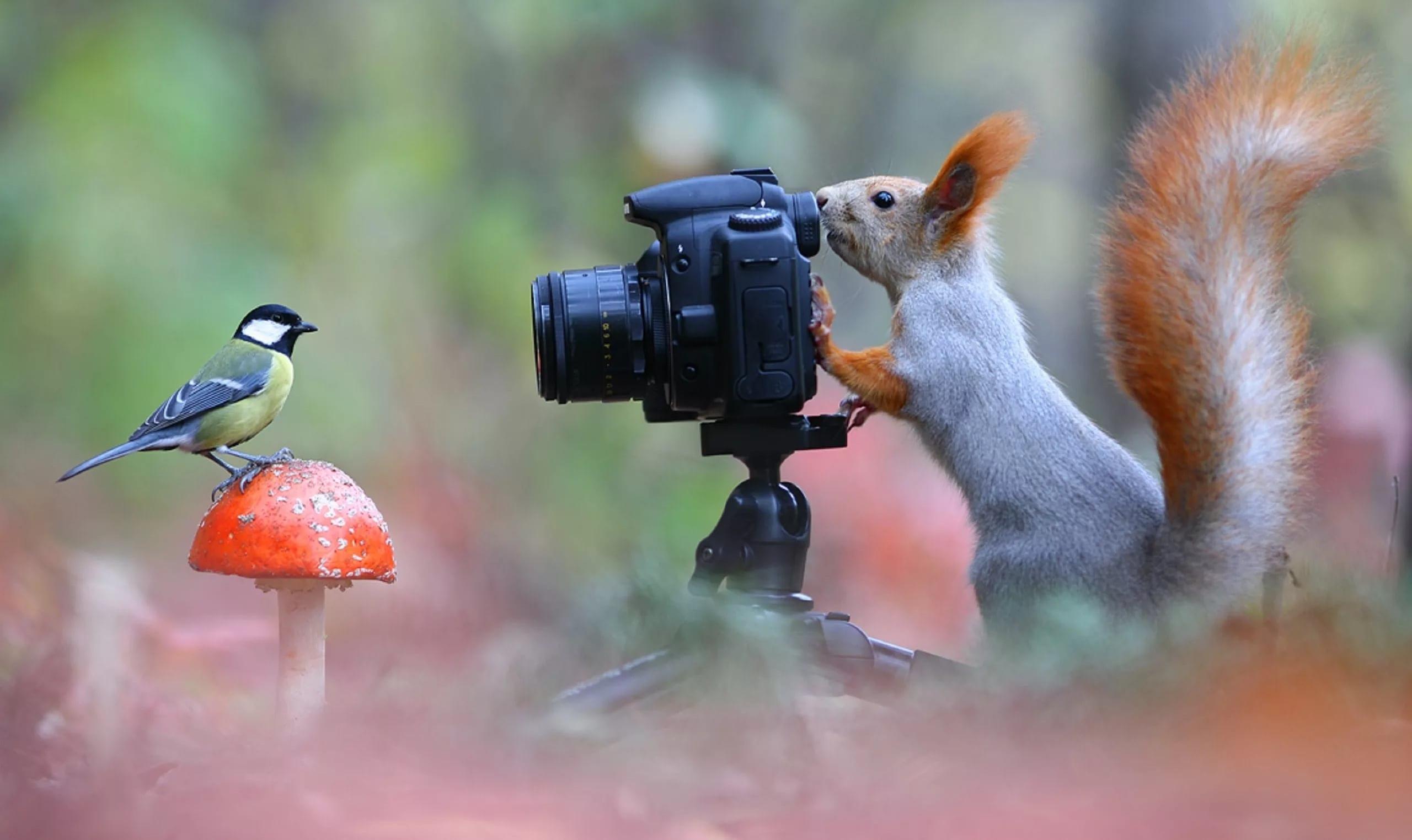начинают прикольные фотографии птиц и животных в лесу также принимает