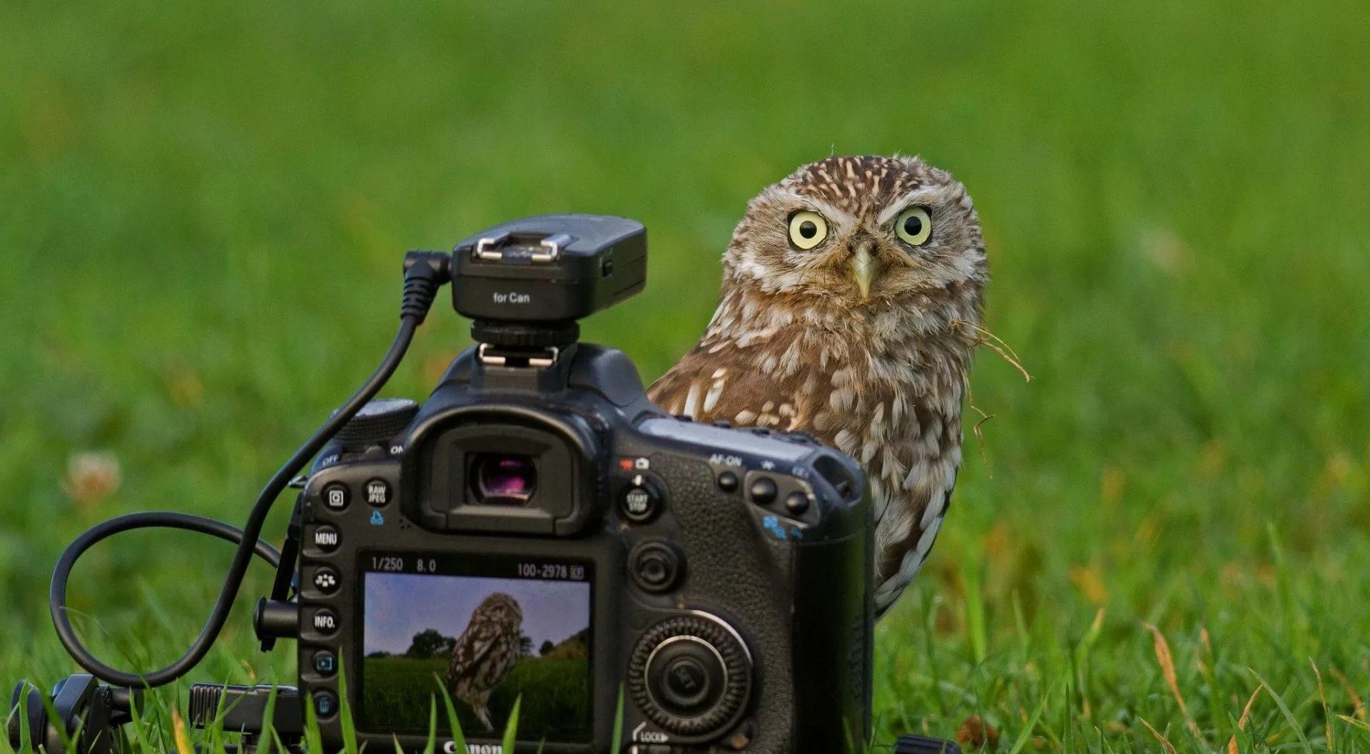 животный мир глазами фотографа свадеб лофтах
