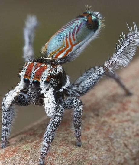Это интересно: Самый красивый паук на планете (12 фото)