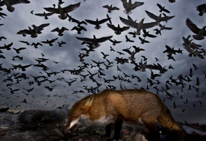 Снимок фламинго стал победителем конкурса на лучшее фото птиц (20 фото)