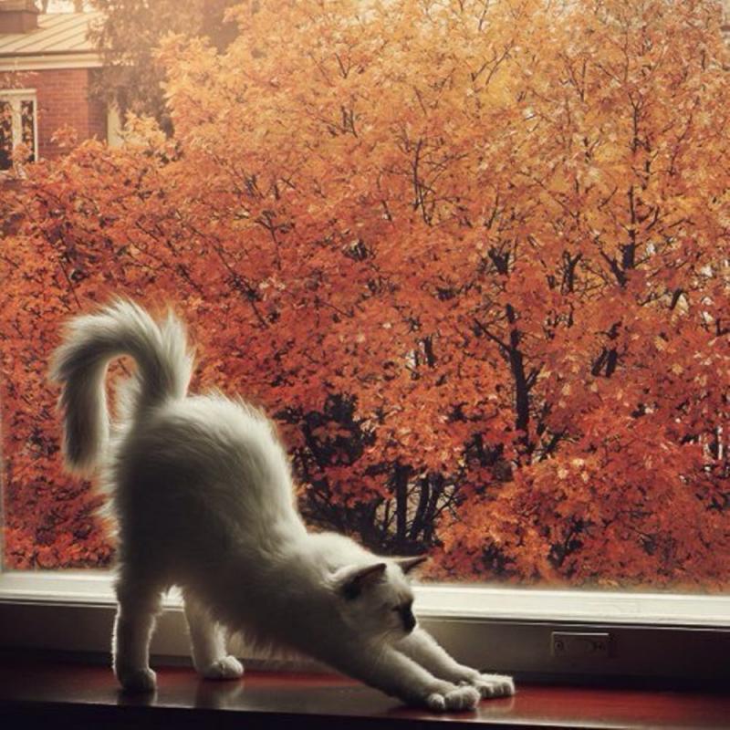 доброе утро картинки с котом осень лунные