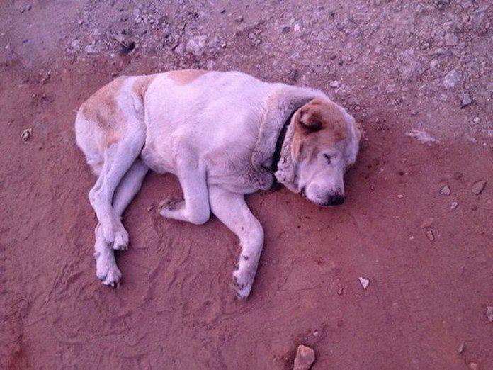 «Бог смотрит на людей глазами собак»...И видит он нелюдей (4 фото)