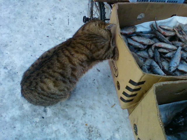 Котэ знают толк в еде:) (35 фото)