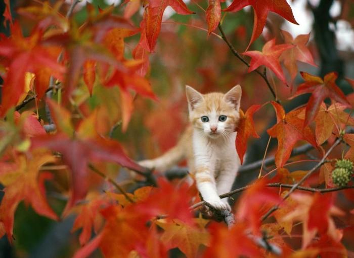 Здравствуй,осень (30 фото)