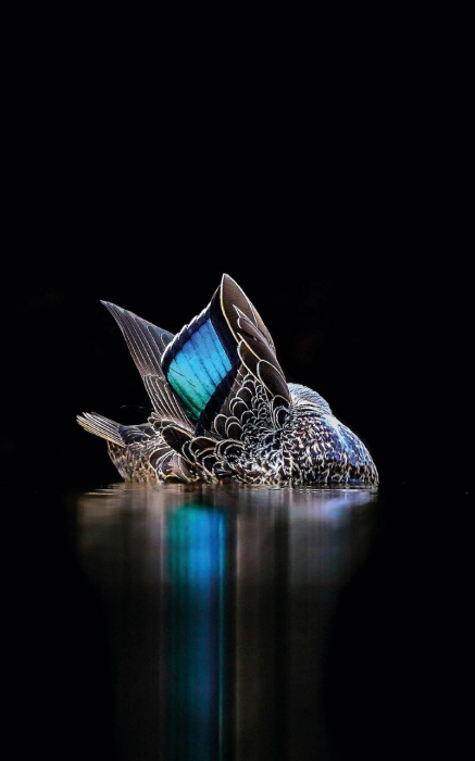 Победители птичьего конкурса Bird Photographer of the Year 2017  (18 фото)