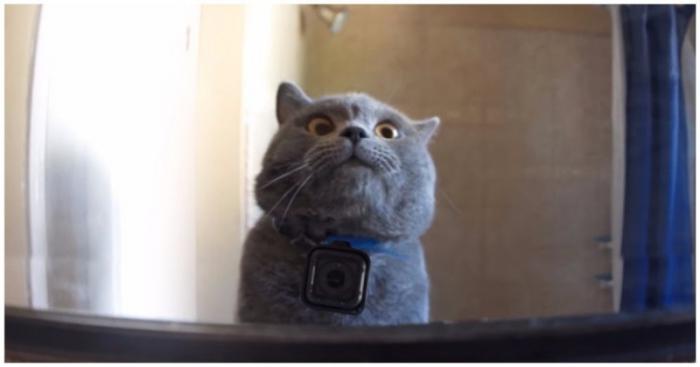 Юмор: Один день из жизни домашнего кота