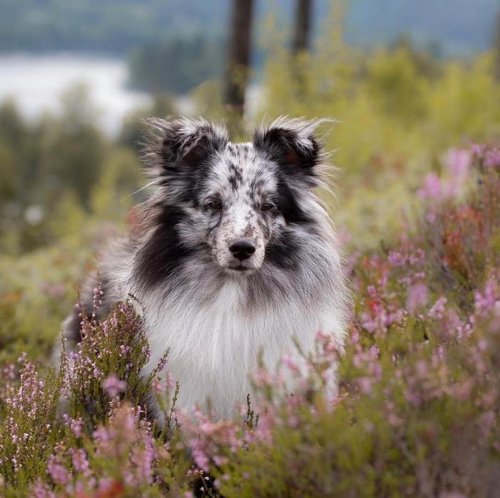 Милые собаки (35 фото)